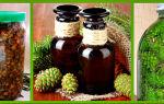 Настойка из сосновых шишек на водке: польза и противопоказания к приему, простые рецепты приготовления напитка