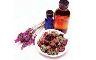 Настойка клевера красного: полезные свойства растения и правильное применение для лечения заболеваний