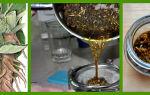 Настойка лопуха: лечебные свойства и правила приготовления напитка, как употреблять