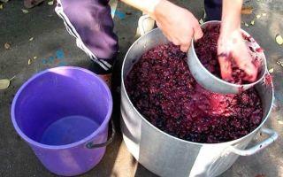 Как сделать чачу в домашних условиях из винограда и его жмыха: простые рецепты