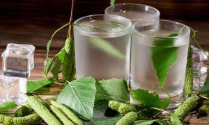 Настойка березовых почек на водке: польза и вред для организма, советы по приготовлению и приему лекарства