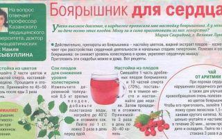 Настойка боярышника: вред и противопоказания лекарства, способ применения и дозировка, приготовление в домашних условиях