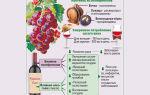 Какое вино полезнее белое или красное: польза и вред напитков, негативные последствия употребления алкогольных напитков