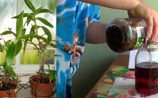 Золотой ус настойка на водке: польза растения, особенности применения и пошаговый рецепт приготовления