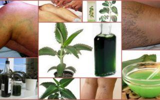 Настойка каланхоэ — как заготовить сырье, лечение различных заболеваний и самостоятельное приготовление