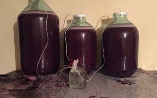 Крепленое вино: что это такое, технология производства и простые рецепты приготовления напитка