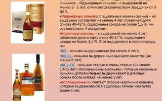 Хороший коньяк: правила выбора, виды и подробная классификация популярных марок