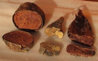 Струя бобра: полезные свойства и противопоказания, как приготовить лечебную настойку в домашних условиях