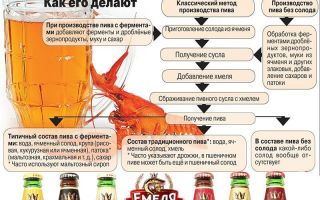 Из чего делают пиво — этапы производственного процесса и вся правда о порошковом продукте
