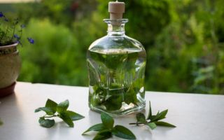 Настойка мяты перечной: как приготовить и принимать лекарство, леченые свойства растения