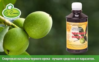 Настойка черного ореха: полезные свойства растения, рецепты приготовления напитка в домашних условиях и противопоказания к применению