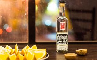 Mezcal (Мескаль): история и культура употребления напитка, как правильно выбрать мексиканский напиток из агавы?
