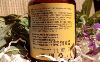 Настойка боровой матки: состав и свойства растения, противопоказания ивозможный вред для организма, как приготовить лекарство в домашних условиях