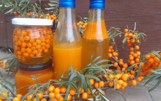 Настойка на облепихе: полезные свойства напитка и простые способы приготовления, противопоказания
